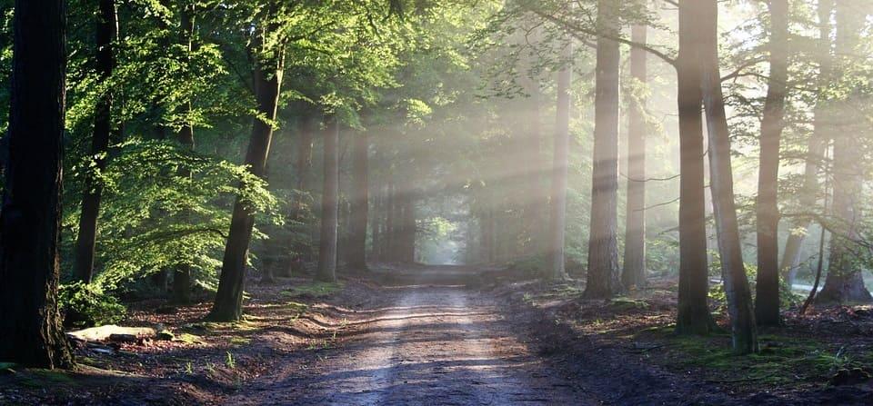 mindfulness camino para meditar